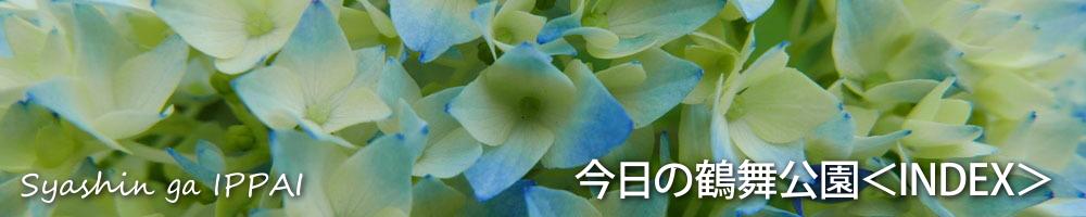 INDEX_0720.jpg